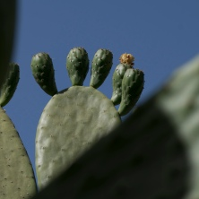 I like how these cacti look like feet.